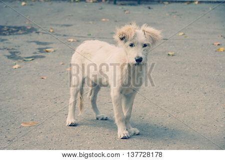 Lonely stray dog looking straight into the camera (retro style)