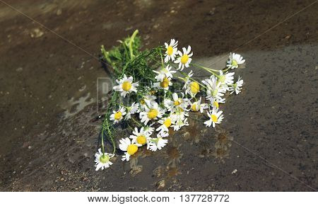 Bouquet of daisies - in a puddle