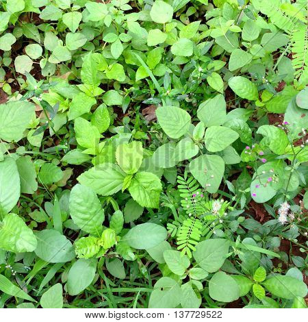 plant on the ground in the forest background