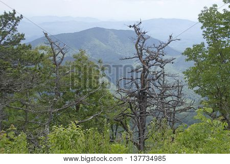 Scenic view overlooking the wild Appalachian Mountain wilderness of North Carolina in summer with lush forest covered mountains wildflowers and picturesque dead trees