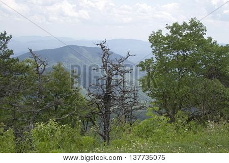 Scenic view overlooking the North Carolina Appalachian Mountain wilderness in summer with mountains forests wildflowers and a snarly dead tree