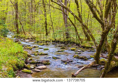 Small forest creek in Great Smoky Mountains National Park at early spring.