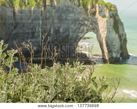 Wild flowers on the cliffs of Etretat and famous cliff Porte d'Aval as background. Etretat, France. Selective focus