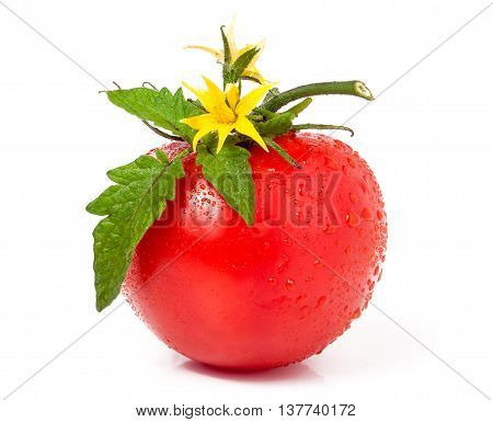 tomato with leaves and flower and water drops isolated on white background