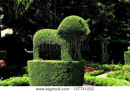 Portsmouth Rhode Island - July 16 2015: A finely crafted topiary lion made with English Privet at Green Animals Topiary Gardens
