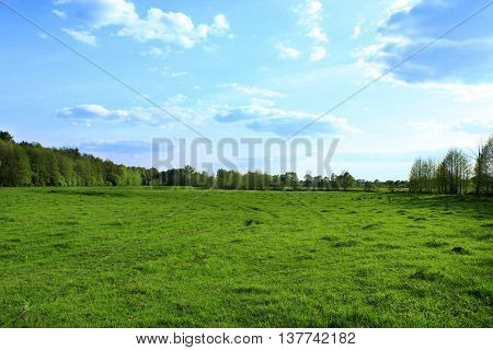 green pasture outside the village near the forest