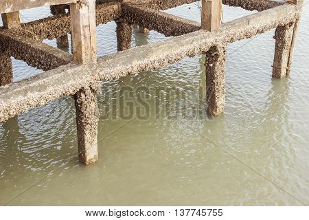 Shellfish on columns of concrete pier, Thailand