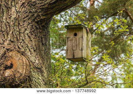 Birdhouse For Birds On The Tree