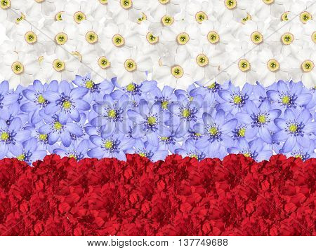 Flag of the Russian Federation of flowers