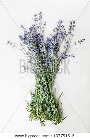 Lavender Bouquet Of White Background
