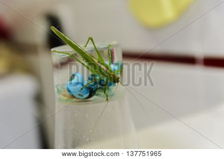 Locusts on the glass with toothbrushes in the bathroom.
