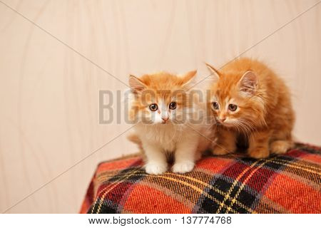 Two cute ginger kittens sit on plaid. Pets. Funny animals.