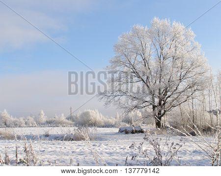 OLYMPUS DIGITAL CAMERA зимний день , красота