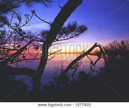 Torrey Pines Twlight S Ca 94