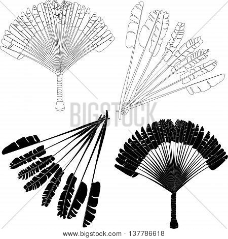Ravenala - traveller's palm - vector drawing of a fan palm tree black and white