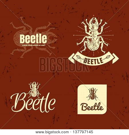 Vector beige and brown set with forest stag-beetle. The beetle as main element of logotypes on brown background. Engraves vector design graphic element emblem logo sign identity logotype