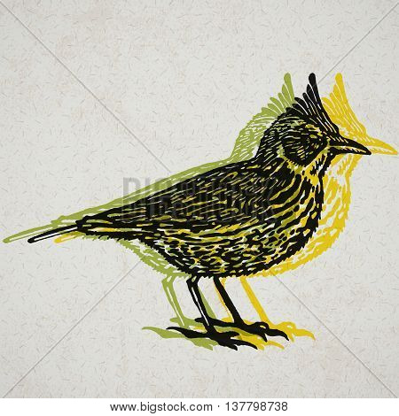 Crested lark bird sign. Desert bird. Vector engraved Illustration. Linocut Crested lark Isolated on old paper