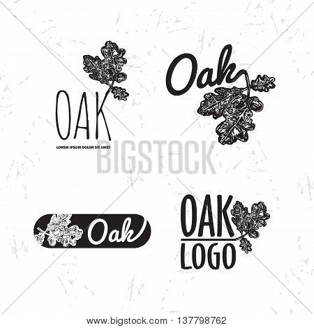 Vector black and white set with oak leaf and acorn. The oak leaf as main element of logotypes on white background. Engraves vector design graphic element emblem logo sign identity logotype