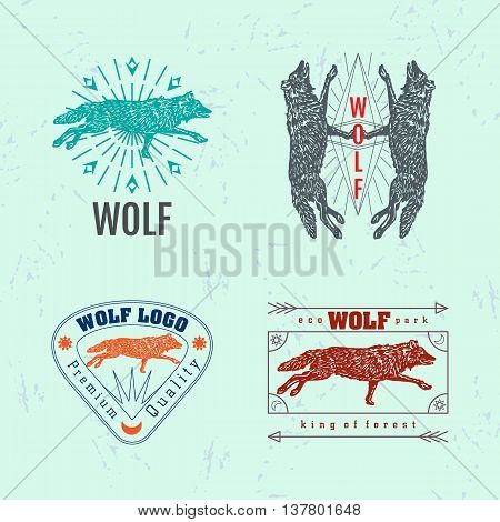 Vector colorful set with forest wolf. The wolf as main element of logotypes on light blue background. Engraves vector design graphic element emblem logo sign identity logotype