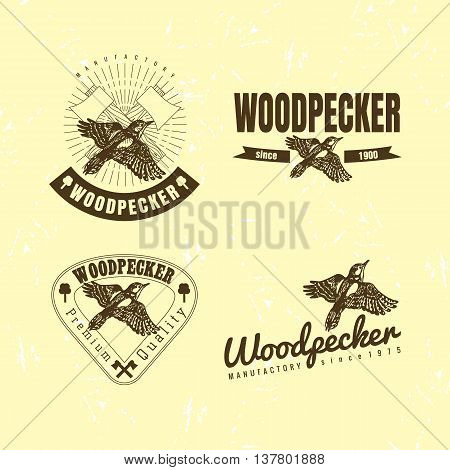 Vector colorful logo set with forest woodpecker bird. The woodpecker bird as main element of logotypes on beige background. Engraves vector design graphic element emblem logo