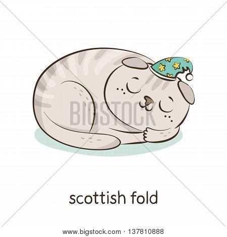 Scottish Fold. Cat Character Isolated On White