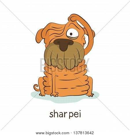 Shar Pei. Dog Character Isolated On White