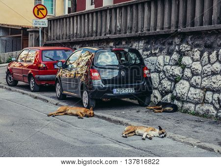 Sarajevo Bosnia and Herzegovina - August 23 2015. Stray dogs on the street in Sarajevo