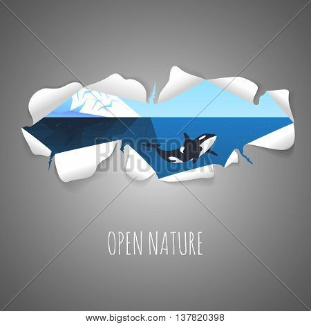 Torn paper with the illustration of iceberg in the sea and killer whale inside. Nature vector background with Torn paper.