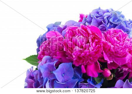 Bright pink peony and blue hortensia flowers bouquet close up isolated on white background