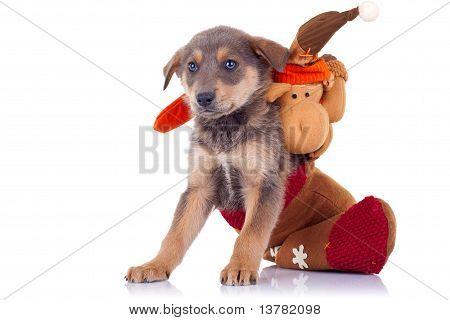 Cute Stray Puppy