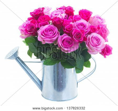 bouquet of pink and magenta fresh roses in watering can isolated on white background