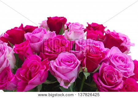 bouquet of fresh pink and magenta fresh roses border isolated on white background