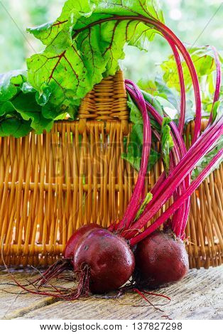 Young organic beetroots with leaves on a wooden table. Vegetables from the garden