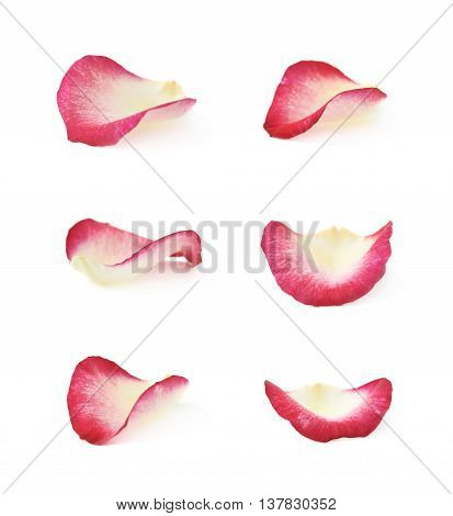 Single rose petal isolated over the white background, set of six different foreshortenings