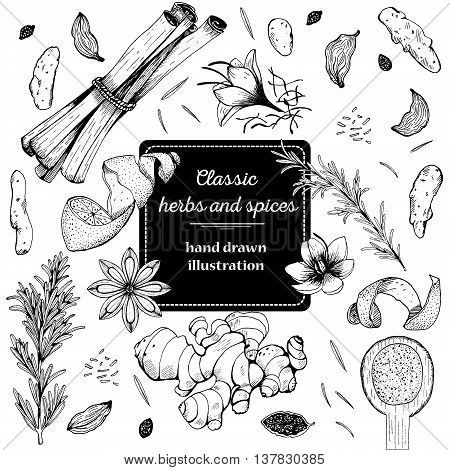 Vintage template. Ink hand drawn design with spice and herbs. Vector card design with hand drawn spices and herbs