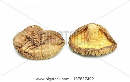 Dried shiitake mushroom on a white background