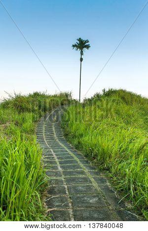 Campuhan Ridge Path, Ubud, Bali