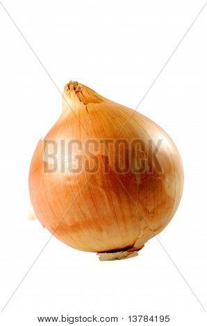 Onion Closeup