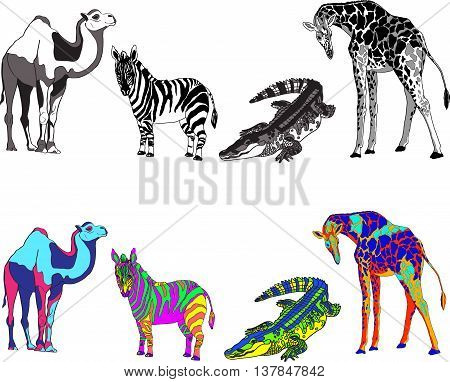illustration with the image of zebra, giraffe, crocodile and camel, made black, white and bright different colors. Vector
