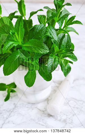 Large bundle of mint in mortar on a marble background mint sauce