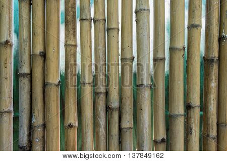 old and dirty bamboo fence in garden background