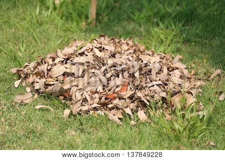pile of dry leaves on the lawn in the backyard for made organic composting.
