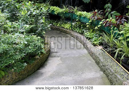 Walkway in the public park of beautiful plant in decorative tree.