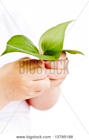 Conceptual image of hands of baby holding fresh green leaves