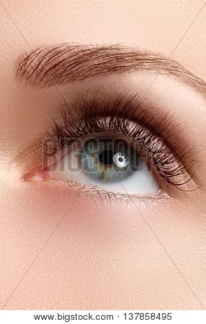 Macro Shot Of Beautiful Eye With Extremely Long Eyelashes
