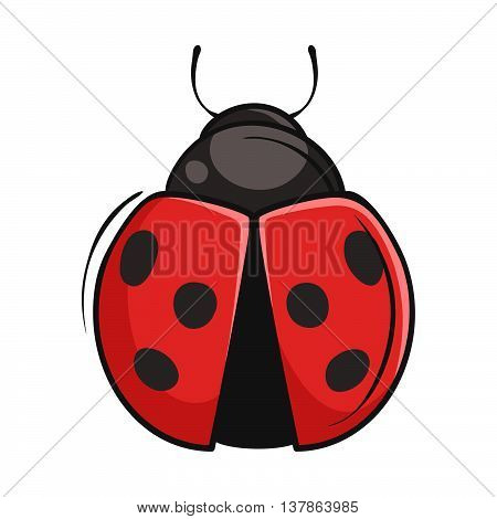 Vector hand drawn illustration of ladybug isolated on white background.
