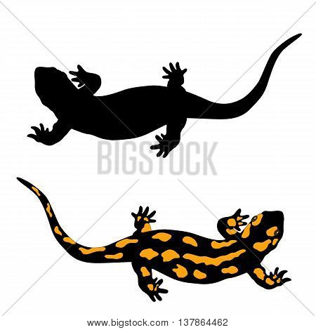 black and yellow salamander amphibian vector illustration isolated set