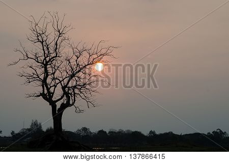 Silhouette pic of a dried tree with orange sun in back.