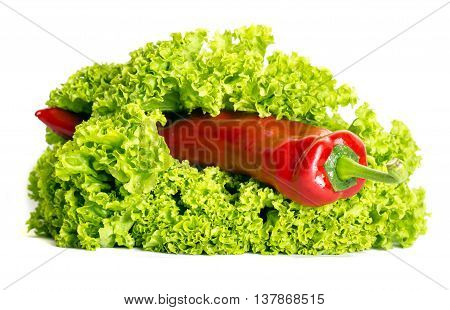 red pepper in a lettuce leaf isolated