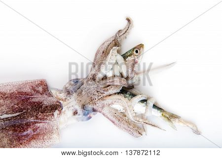 Squid Hunting A Fish Isolated On White